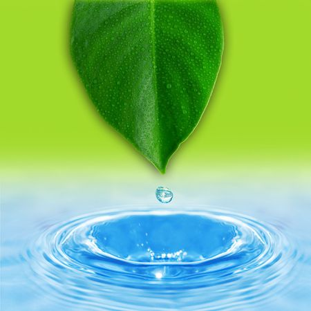 water drop and green leaf Stock Photo