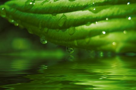 green background with grass and water drop Stock Photo - 3761488
