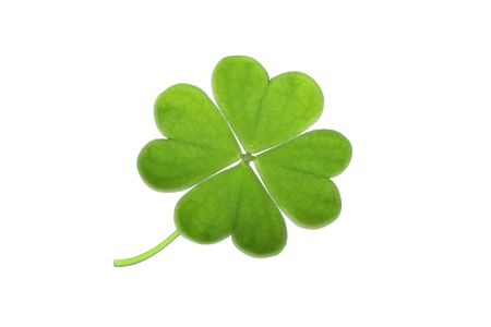 four leaf clovers:  green clover isolated on white