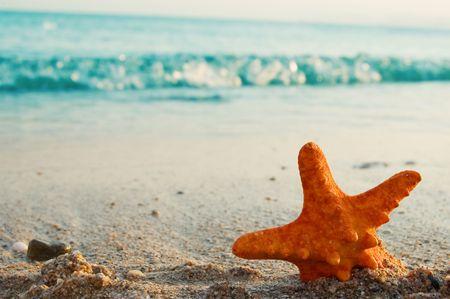 red starfish on sand close up photo