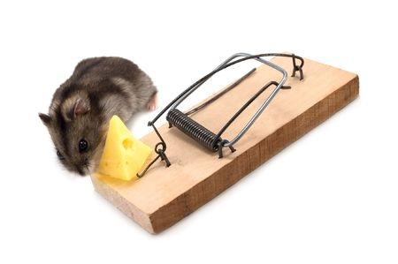 mouse and trap isolated on white Stock Photo - 3761404