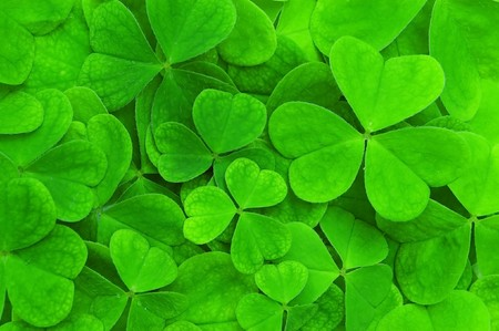 irish culture: background from green clover leaf Stock Photo