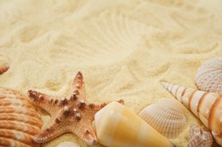 Summer background. Cockleshell on sand Stock Photo - 4019199