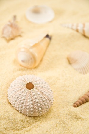 Summer background. Cockleshell on sand Stock Photo - 4019198