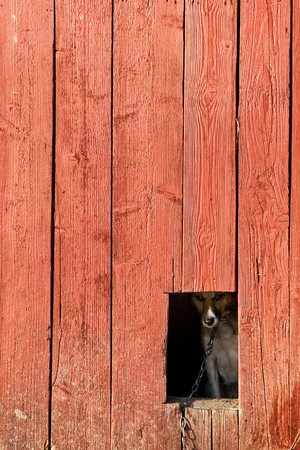 loneliness dog on wood kennel photo