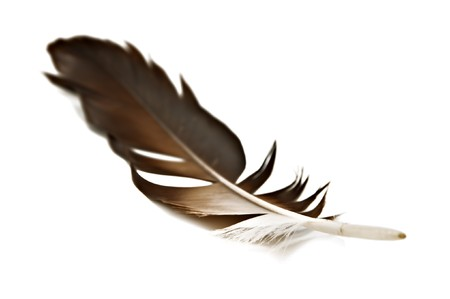 hawk feather isolated on white Stock Photo