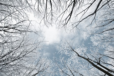 frozen winter forest and sky photo