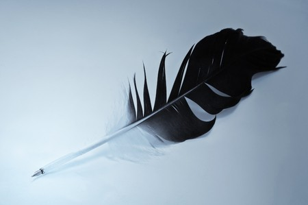 big hawk feather close up Stock Photo - 4227788