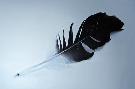big hawk feather close up Stock Photo - 4227788
