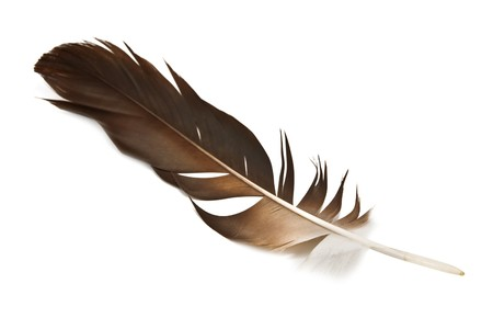 feather pen:  hawk feather isolated on white Stock Photo