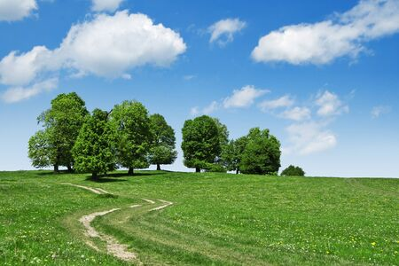 road and tree on green field photo