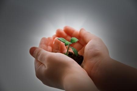 vida social: planta peque�a parte y el ni�o