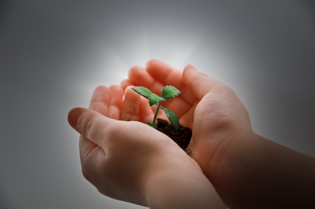 small plant and child hand