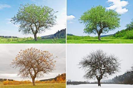 alone tree in for season Stock Photo