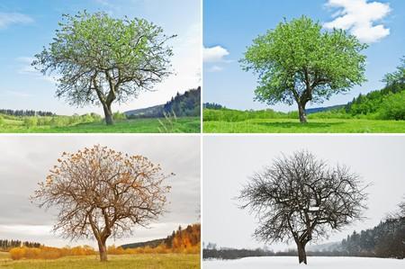 quatre saisons: seul arbre pour la saison