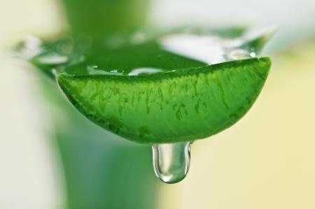 aloe juice drop close up