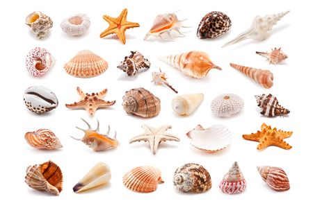 Collection of cockleshell isolated on white photo