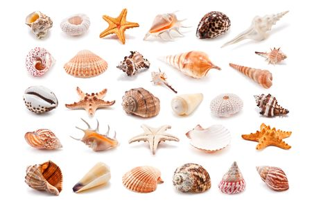 cockleshell collection isolated on white photo