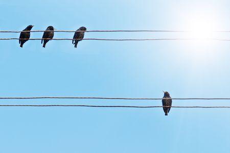 delito: estorninos sobre el cable el�ctrico Foto de archivo