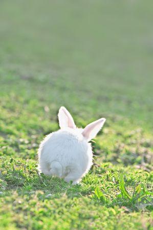 gray rabbit in grass closeup photo