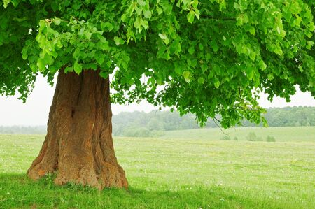large green tree close up photo