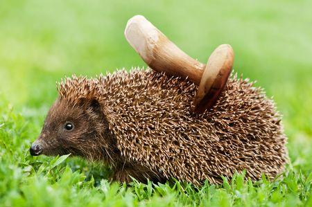 hedgehog with mushroom close up Stock Photo - 5043508