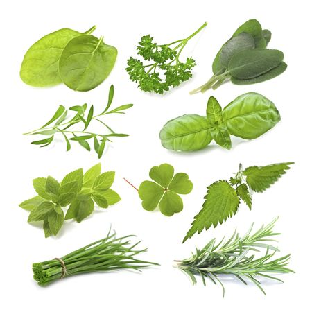 collection of green herb isolated photo