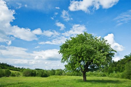 green tree and cloudy sky Stock Photo - 5043615