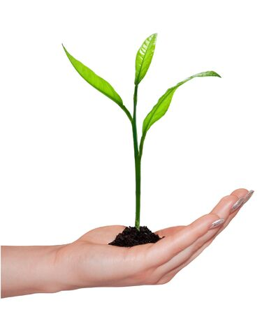 woman hand and plant isolated Stock Photo - 5055040
