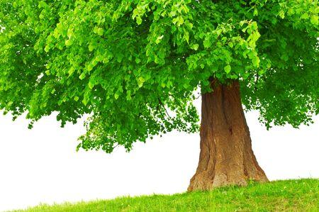 large family: large green tree close up Stock Photo
