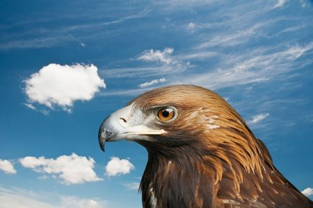 golden eagle on cloude sky photo