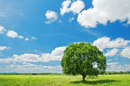 green tree and cloudy sky Stock Photo - 5098200