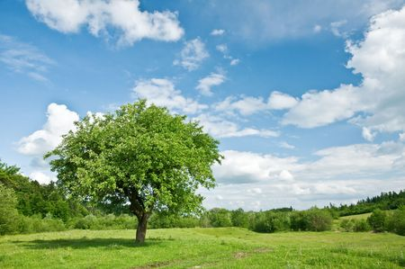 green tree and cloudy sky photo