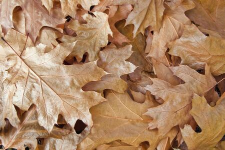 aging autumn leaves close up photo