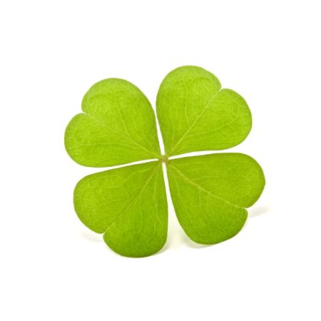 green clover isolated on white Stock Photo - 5344512