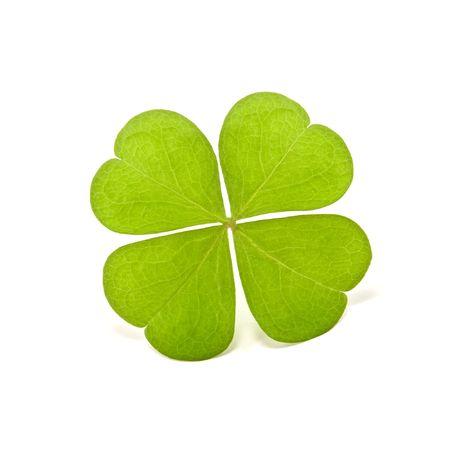 four leaf: tr�bol verde aisladas en blanco