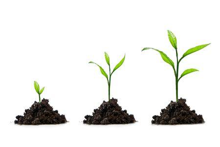 pflanze wachstum: drei kleine Baum lokalisiert auf Wei�