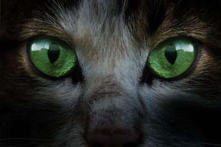 b�se augen: gr�ne Katze Augen sehr nahe