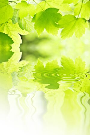 leafs and water - nature concept photo
