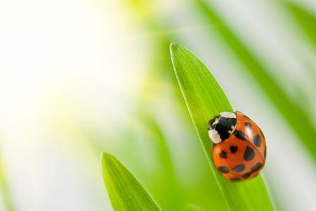 ladybug on green grass close up photo
