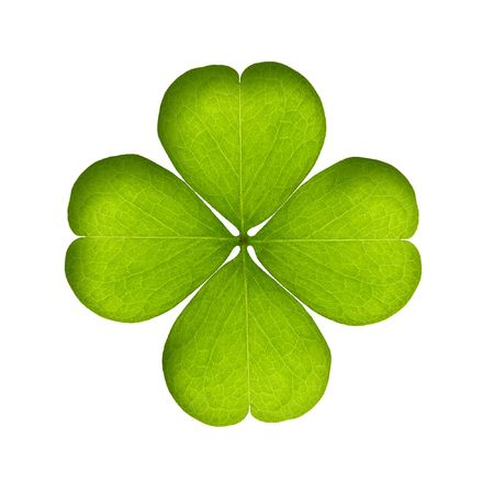 green clover isolated on white  Stock Photo - 6359684