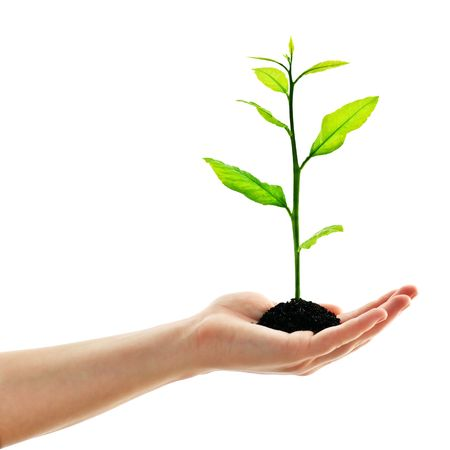 plant in man hand isolated on white Stock Photo - 6359682