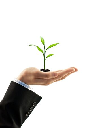 plant in man hand isolated on white photo