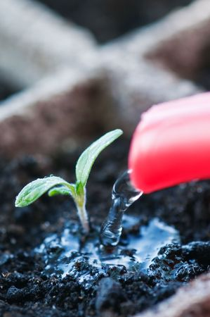 pouring water to small seedling  photo