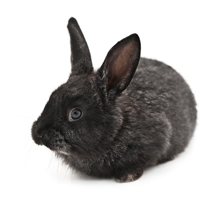 bunnie: rabbit isolated on white background