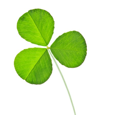 green clover isolated on white Stock Photo - 6978912