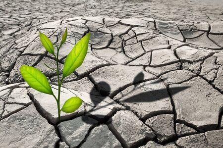 kleine Pflanze, die in gekracht Wachstum
