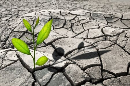 barren: small plant in cracked growth Stock Photo