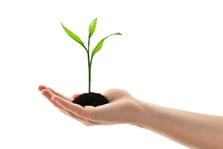 plant in woman hand isolated on white photo
