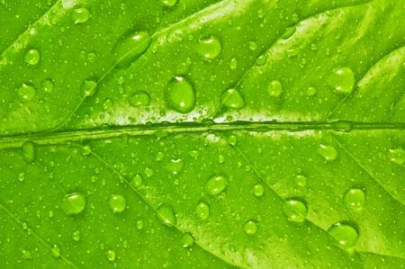 grünes Blatt Hintergrund mit Regentropfen